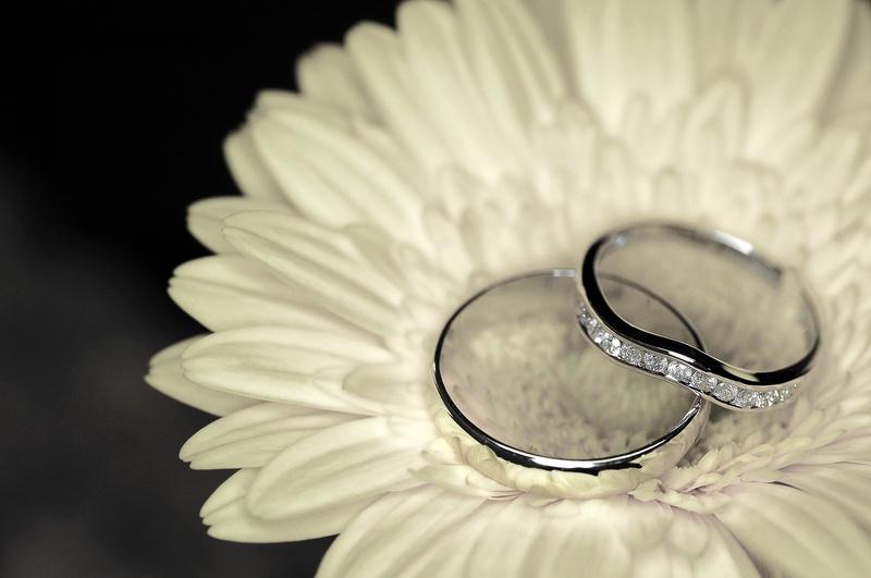 Gerbera and Rings